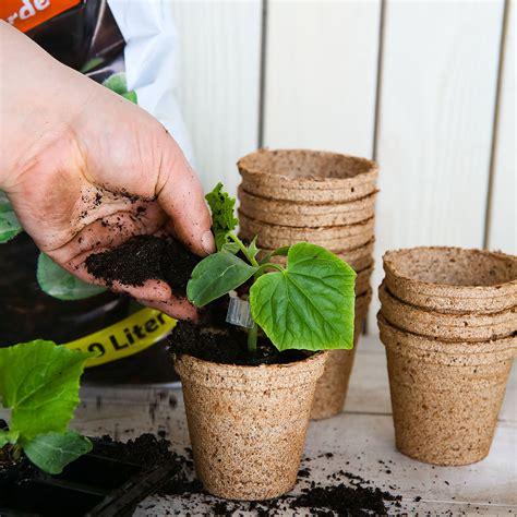 Mini Gurken Pflanzen Kaufen by Mini Jungpflanze Gurke Mini F1 Veredelt