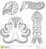 Coloring Cephalopods Cuttlefish Drawn Octopus Nautilus Designlooter 1300 4kb Vector sketch template