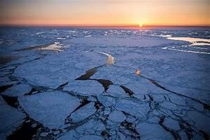 Warming ocean waters off Alaska bring widespread ...