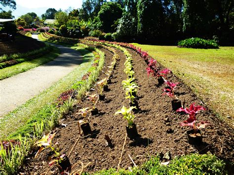 how to start a flower bed how to effortlessly start a flower bed from scratch