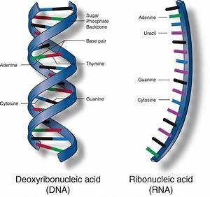 Macromolecules Are Large Organic Molecules  Macromolecule
