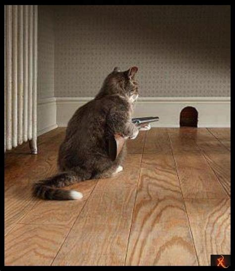Cat Trap Meme - mouse trap musicbimentor not important but appealing pinterest mouse traps mice and