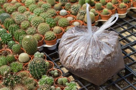 ดินปลูกแคคตัส 5 ลิตร - วาเลนไทน์พันธุ์ไม้