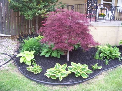 where to plant a japanese maple tree 25 best ideas about dwarf japanese maple tree on pinterest dwarf japanese maple japanese