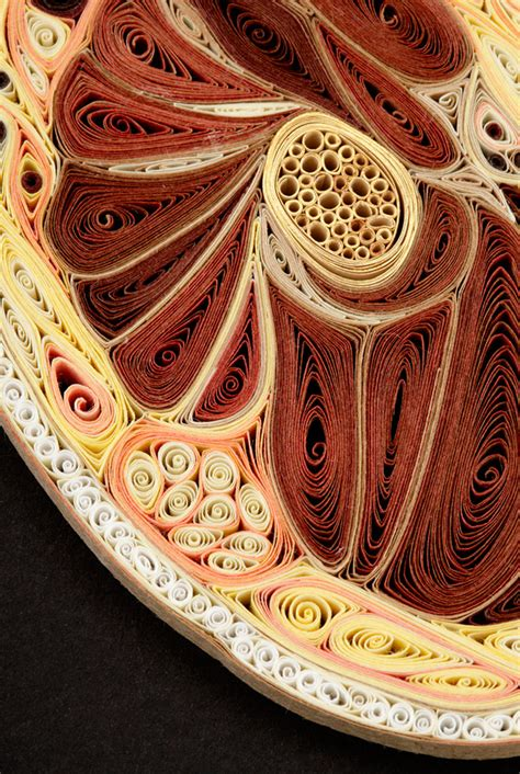 anatomical cross sections   quilled paper  lisa