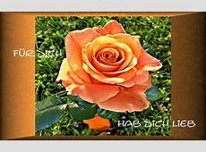 Foto von Rosen für Dich hab Dich Lieb Bildvon Rosen