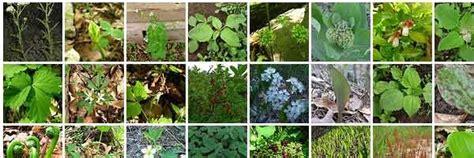 cuisiner pour les autres les plantes sauvages comestibles guide de survie