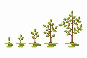 Green Tree Growth Vector Diagram