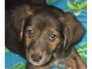 Local Pet Adoption Animal Shelter
