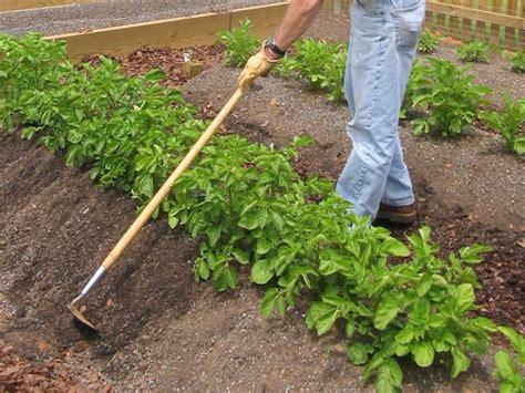 how to grow potatoes how to grow potatoes how tos diy