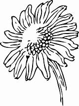Sunflower Drawing Line Clip Simple Outline Flower Clipart Coloring Colouring sketch template