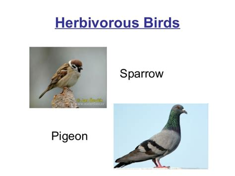 is a bird an omnivore 2 hrly gs ch 08 vertebrates part 1