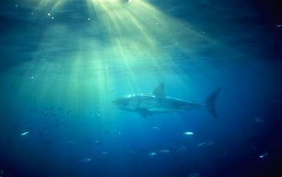 Shark Ocean Desktop Sharks Wallpapers Oceans Background
