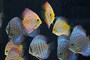 Tropical Fish Manufacturers & Suppliers - Tropical Fish ...