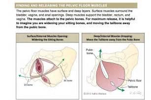 high tone pelvic floor dysfunction physical therapy the pelvic health handout project pelvic guru