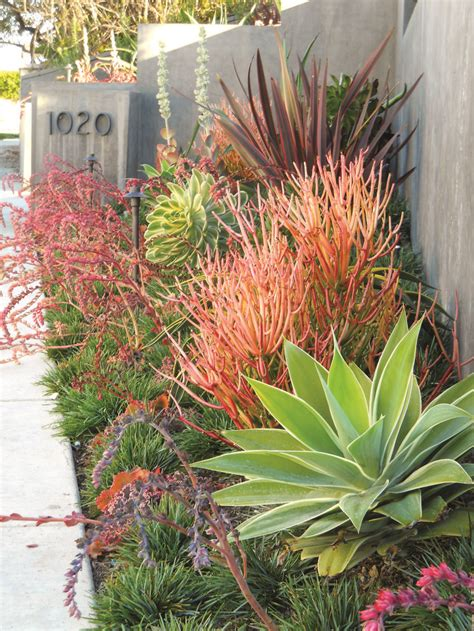 25 best ideas about xeriscaping on low water