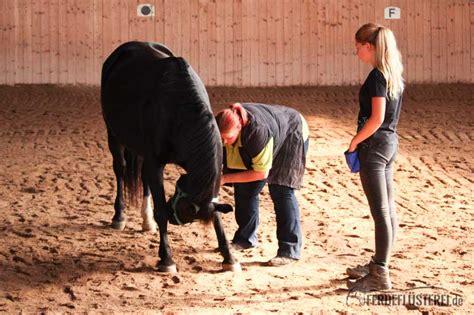 zirkuslektionen pferd  sie alles fuer eure pferde tun