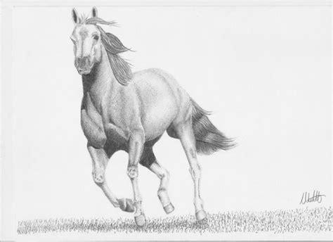 disegno  matita cavallo forum natura mediterraneo