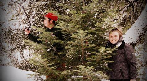 christmas tree hunting season opens next week get your