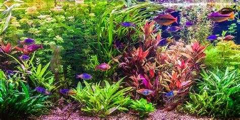 Albany, Plattsburgh, Glens Falls, Saratoga Custom Aquarium ...