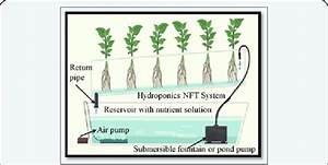 Shows The Nutrient Film Technique  Nft   Water Culture Or
