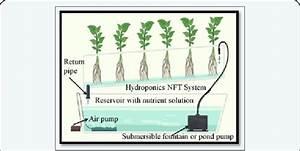 Shows The Nutrient Film Technique  Nft   Water Culture Or