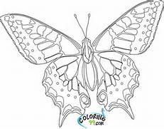 butterfly life cycle coloring pages 436993 coloring