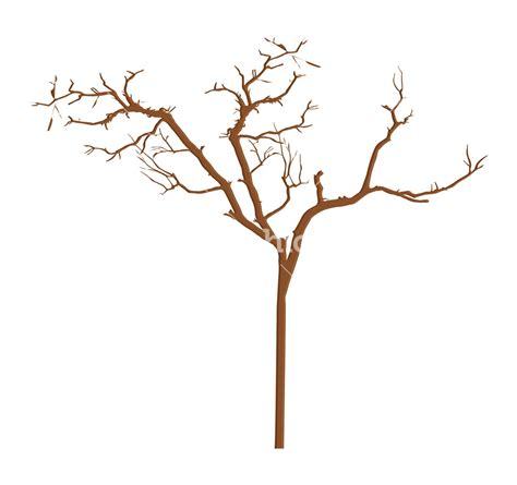 tree branch designs dry tree branches designs stock image