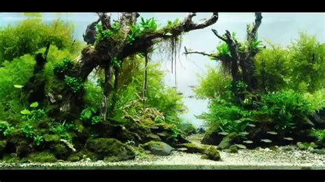 Fish Tank Aquascaping by Most Beautiful Aquascapes Underwater Landscapes