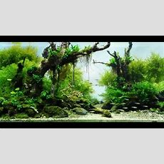 Most Beautiful Aquascapes (underwater Landscapes) Youtube