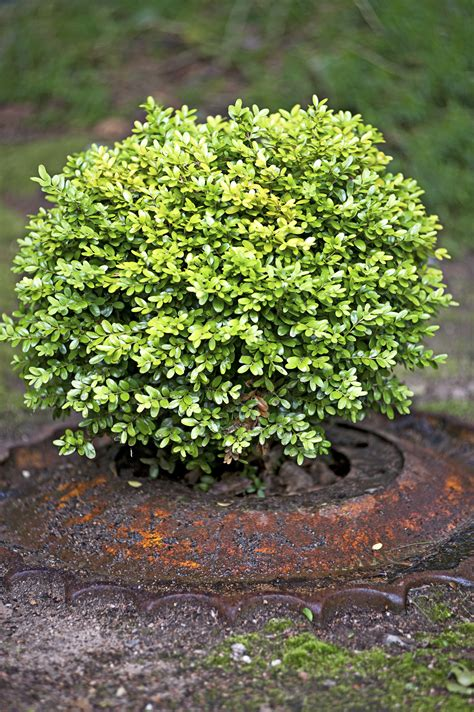 22 Best Plants For Hedges Better Homes And Gardens