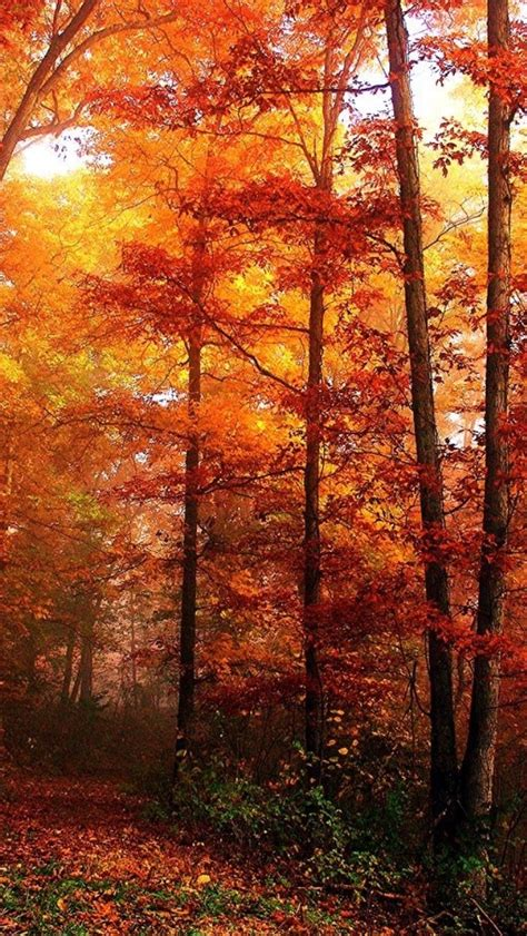 Orange Fall Wallpaper by Iphone Orange Fall Autumn Leaves Backgrounds Wallpapers