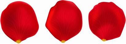 Petal Rose Clipart Clip Library