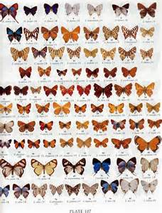 Butterfly and Moth Identification Guide