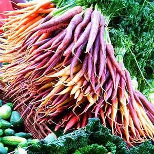 500pcs Purple Dragon Carrot Seeds Organic Nutritious ...