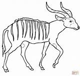 Bongo Coloring Antelope Pages African Printable Forest Drawing Supercoloring Categories sketch template