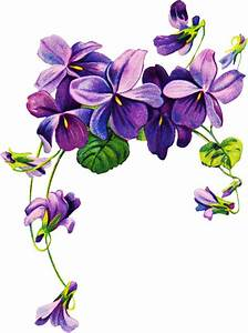 17 Best images about Flower Illustrations on Pinterest ...