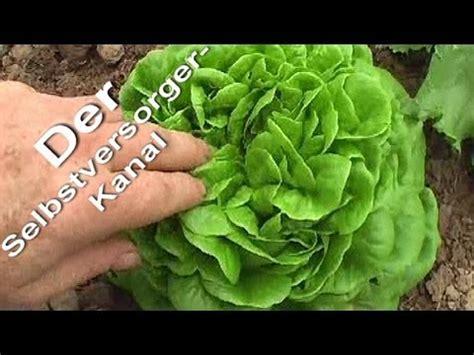 neue salatsorte ausprobiert und total begeistert youtube