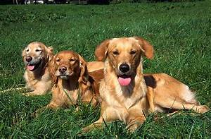 Mietwohnung Mit Hund : ruhige hunderassen diese rassen geh ren dazu ~ Lizthompson.info Haus und Dekorationen