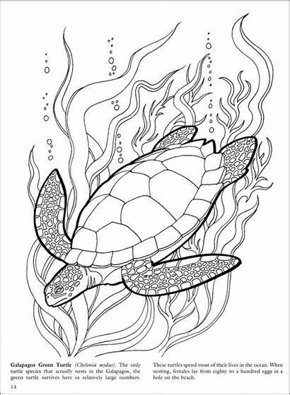Reef Barrier Coloring Drawing Coral Coloriages Turtle
