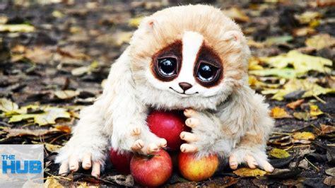 adorable animals    super dangerous