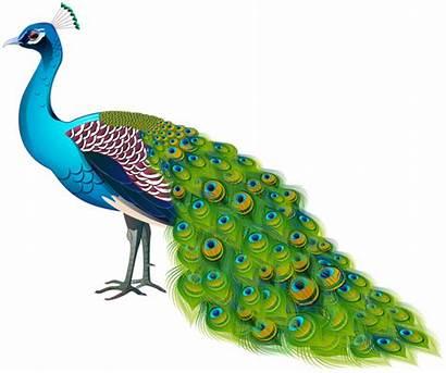 Peacock Transparent Clipart Birds Yopriceville Background Bird