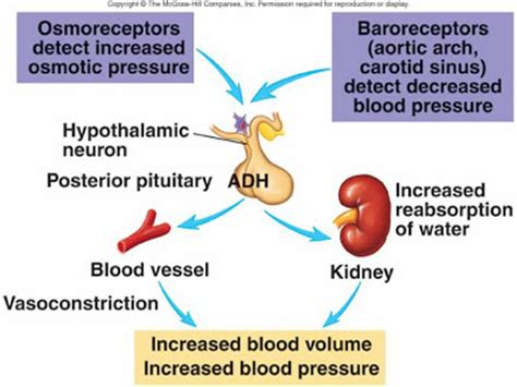 diabetes insipidus neurogenic