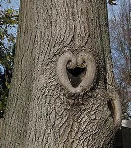 Comment Creuser Un Tronc D Arbre : la nature a du coeur jeu page 3 ~ Melissatoandfro.com Idées de Décoration