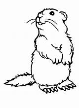 Coloring Woodchuck Pages Groundhog Printables Drawing Animal Groundhogs Colouring Dog Printable Ink Low Puzzles Printcolorfun Crafts Bestcoloringpagesforkids Prairie Animals Version sketch template
