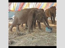 34 animals seized from circus of torture in Nanded