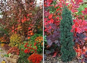 Arbuste D Intérieur : arbres et arbustes planter pour un automne color ~ Premium-room.com Idées de Décoration