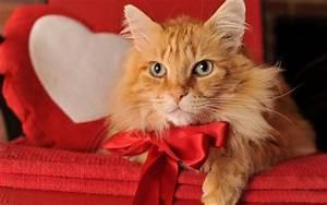 10 best Ginger cats images on Pinterest