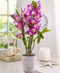 Zimmerpflanzen Pflege Tipps : tipps zur orchidee pflege wie berdauert die orchidee ~ Lizthompson.info Haus und Dekorationen