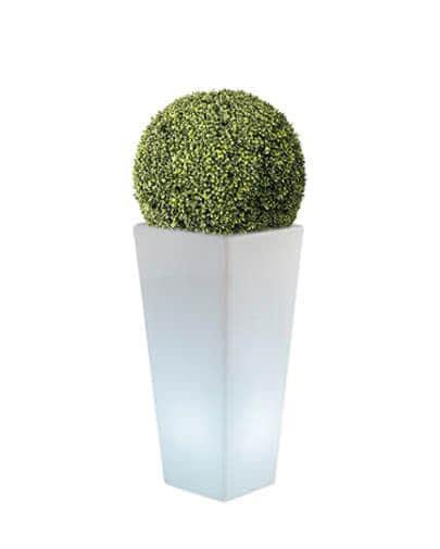 siepe in vaso noleggio sfera in eco siepe e vaso y pot light per eventi
